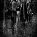 Bandportfolio Annagemina #9